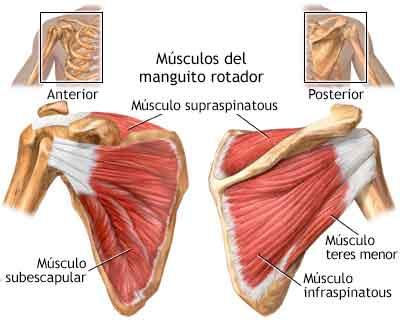 manguito rotador hombro